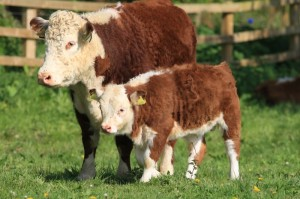 Mini with her surrogate standard size mum